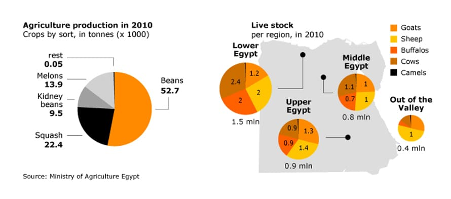 Economy Egypt - Live stock and agriculture production