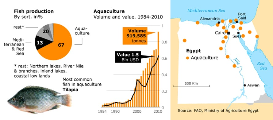 Economy Egypt - Fish production/Aquaculture