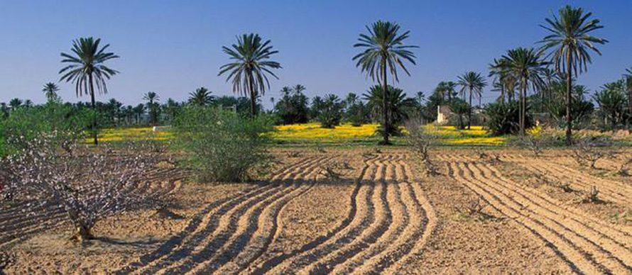 Economy Tunisia - Agriculture