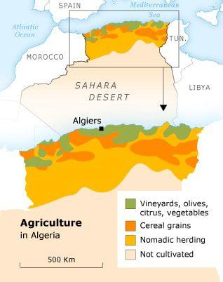 Economy Algeria - Agriculture