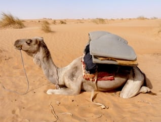 The use of camels changed trade in the Arab world