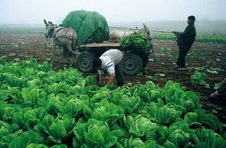 Farming in the West Bank / Photo HH