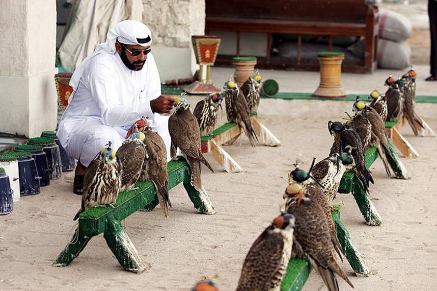Falconry is a traditional sport in Qatar and still popular Photo HH
