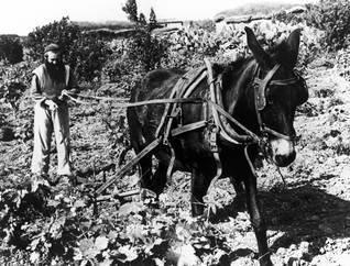 روماني ناجٍ من الحرب العالمية الثانية يستوطن قرية فلسطينية مهجورة عام 1950 Photo Gamma/Keystone/HH