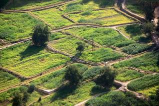 مزرعة تقليدية Photo Shutterstock / اضغط للتكبير