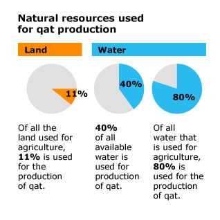 Economy Yemen - Natural Resources Qat Production
