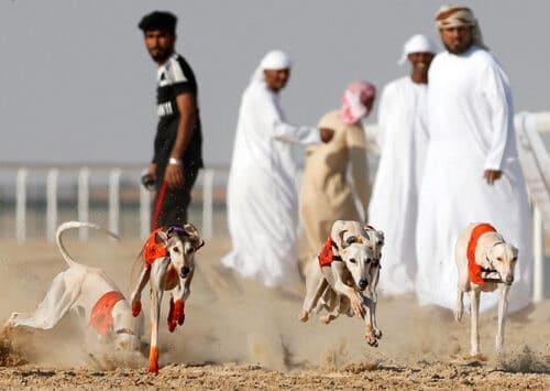 الرياضة في السعودية
