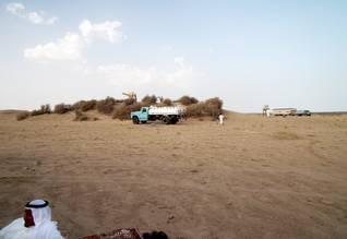 الكويت صحراء