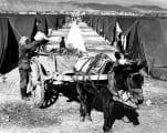 Sbeineh camp