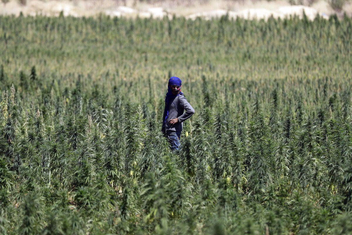 legal system lebanon cannabis