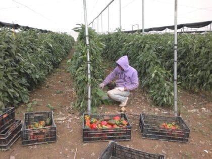 تقييد الوصول إلى الأراضي الزراعية في قطاع غزة