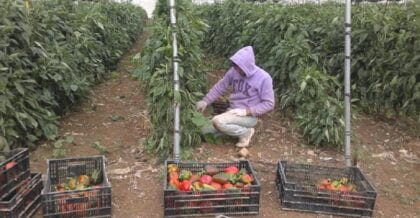 Restricted Access to Agricultural Land in the Gaza Strip