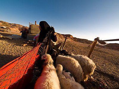 Bedouin woman, Sinai