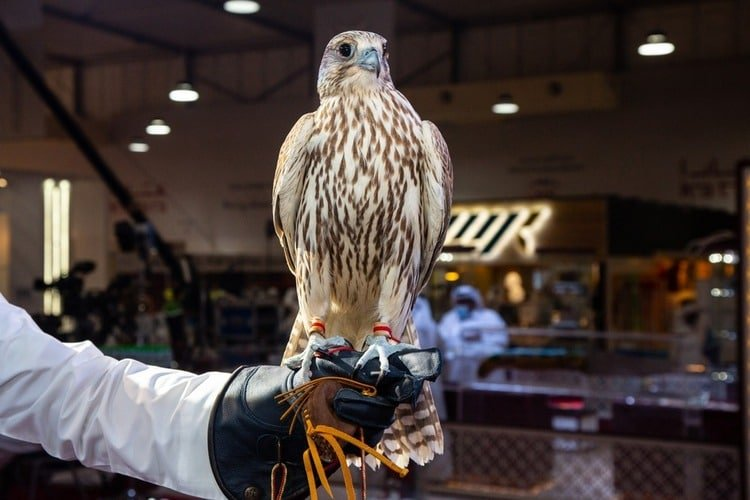 Katara International Hunting and Falcons Exhibition