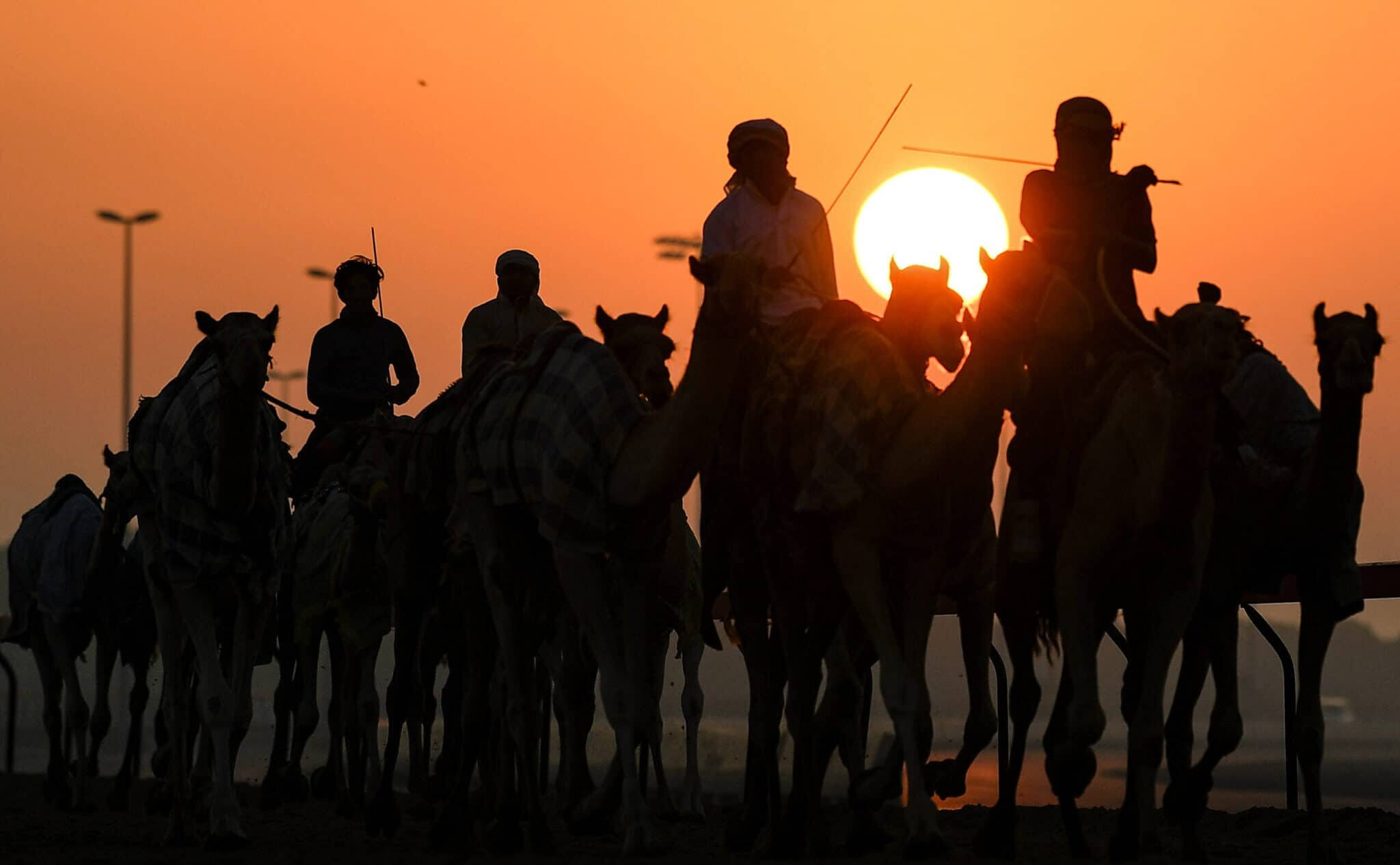 Picture showing Camels race part of the culture in UAE