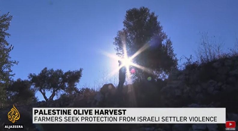 Palestinian Farmers Threatened by Israeli Settlers as Olive Harvest Approaches