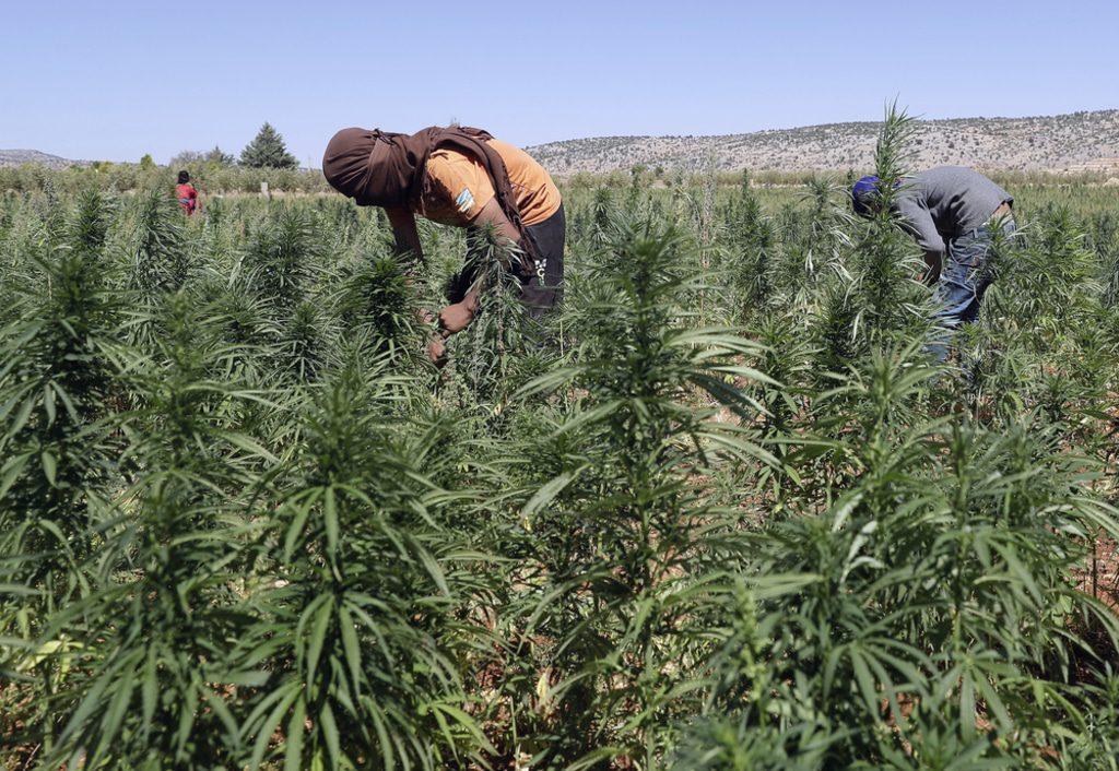Lebanon- cannabis Lebanon