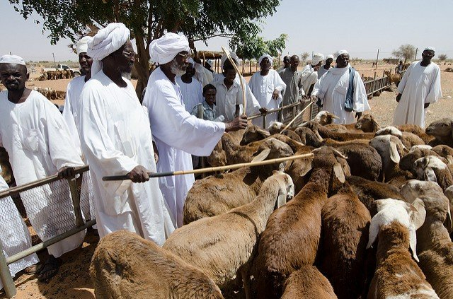 Livestock trade at Al Nnuhoud Livestock Market, North Kordofan_Salahaldeen NadirWorld Bank_Fanack640px