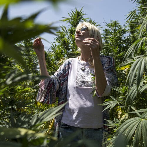 In Morocco, Cannabis remains a Sensitive Topic