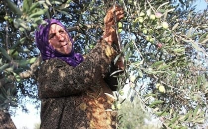olives, salem, nablus