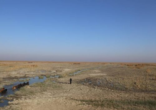 War, Mismanagement and Climate Change: Iraq's Environment Pushed to the Brink