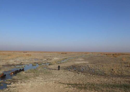 الحرب وسوء الإدارة وتغير المناخ: بيئة العراق على حافة الهاوية