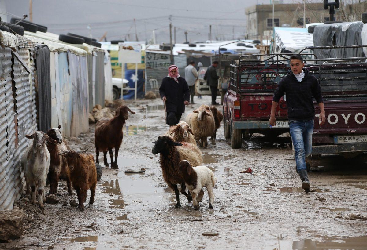 رجل سوري يرعى الأغنام في الأراضي الطينية بسبب هطول الأمطار الغزير في مخيم للاجئين السوريين في بلدة المرج في البقاع، شرق لبنان - اللاجئين السوريين