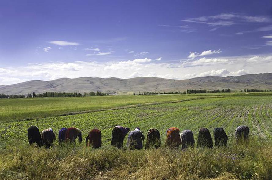 Economy Turkey - Harvesting