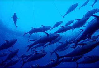 Libya Economy - agriculture tuna
