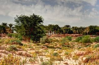 Ruins of Diriya
