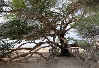 شجرة الحياة Photo Shutterstock / اضغط للتكبير