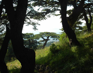 Chouf Cedar Nature Reserve