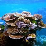 Geography UAE - Coral Reefs