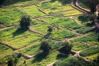 Geography Yemen - Farmland
