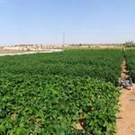 Geography UAE - Beans Farm