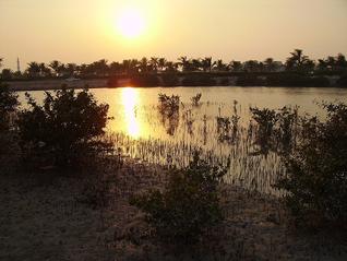 Geography Qatar - Mangrove Swamp al-Khor