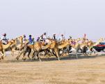 Qatar's national culture