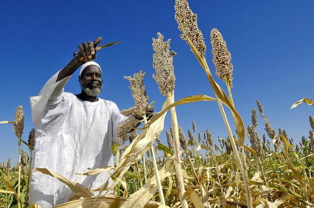 sorghum Sudan Economy