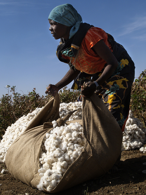 Sudan population cotton
