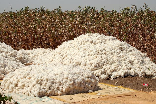 Cotton plantation Sudan Economy