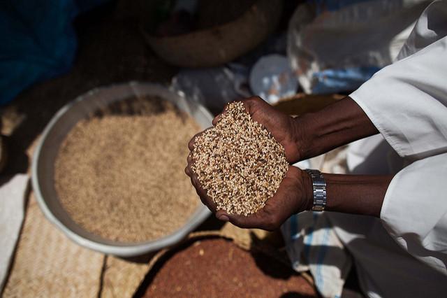 Sesame production in Sudan Economy